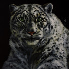 SNOW_LEOPARD_oil_on_canvas_30x30_2012
