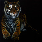 TIGRE_oil_on_canvas_65x54_2012_(1)
